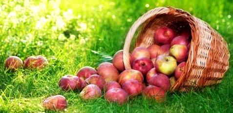 Äpfel helfen Herzkrankheiten vorzubeugen