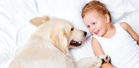 Baby und Hund schlafen in einem Bett