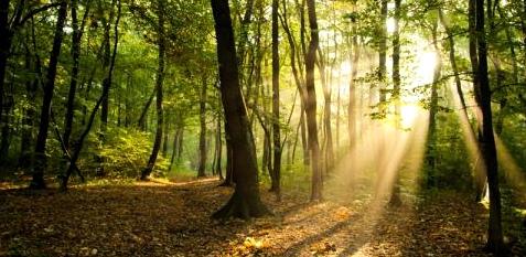 Strahlen fallen durch das Blätterdach im Wald