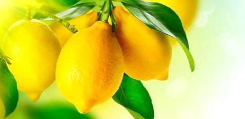 Zitronen sind Vitamin-C-Bomben