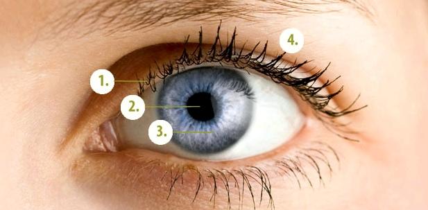 das-menschliche-auge-pupille-iris-wimpern-augenlid