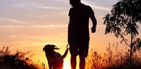 Tiere haben Einfluss auf unseren Heilungsprozess