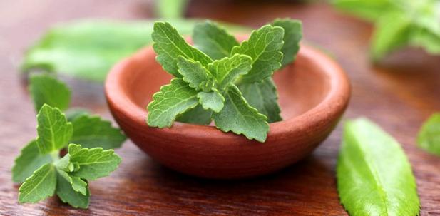 Stevia ist nicht gesund