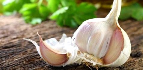 Knoblauch schützt vor Krebs und Herzkrankheiten