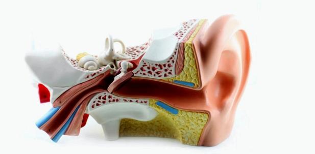 Eine mögliche Ursache für Hörsturz ist eine Durchblutungsstörung