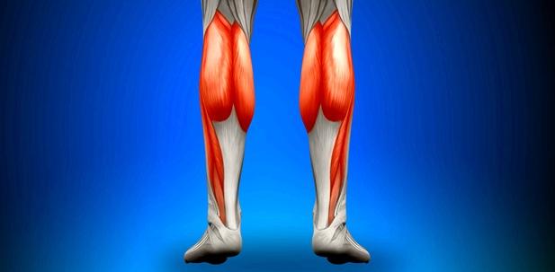 Illustration der menschlichen Wadenmuskeln