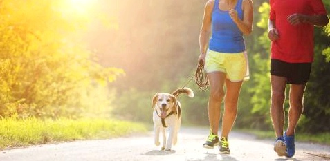 Ein Paar joggt mit einem Hund