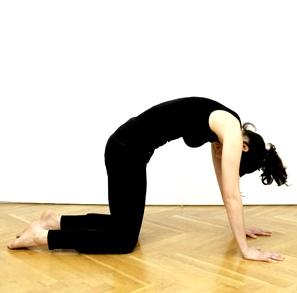 Yoga hilft bei Bluthochdruck: Katze