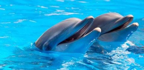 Delfintherapie bei posttraumatischer Belastungsstörung