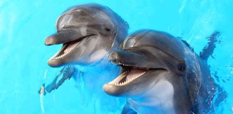 Bevor sie erblindet, möchte Jessica mit Delfinen schwimmen